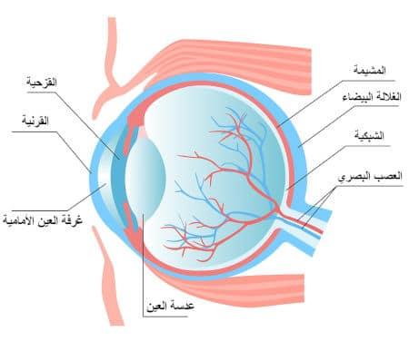 القرنية هي إحدى مكونات العين